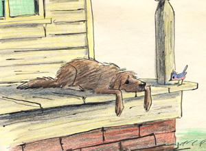 SCAMP ON PORCH
